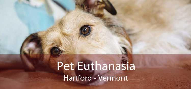 Pet Euthanasia Hartford - Vermont