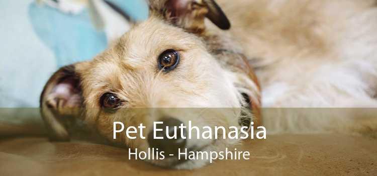 Pet Euthanasia Hollis - Hampshire