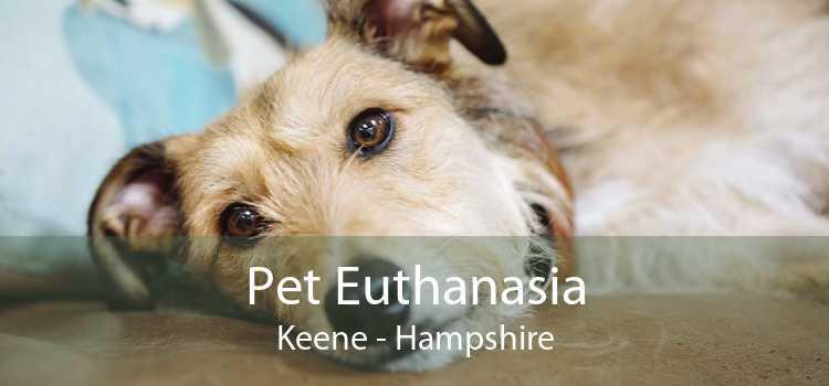 Pet Euthanasia Keene - Hampshire