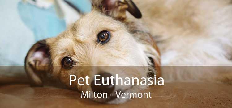 Pet Euthanasia Milton - Vermont