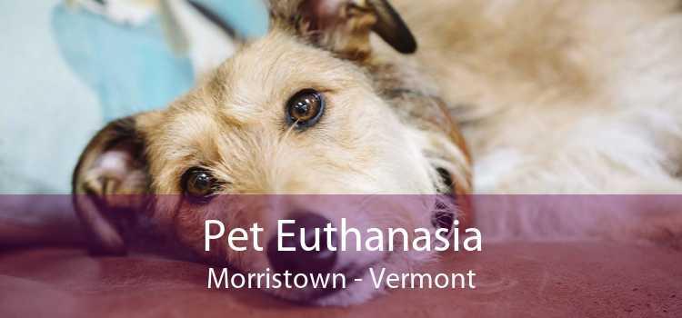 Pet Euthanasia Morristown - Vermont