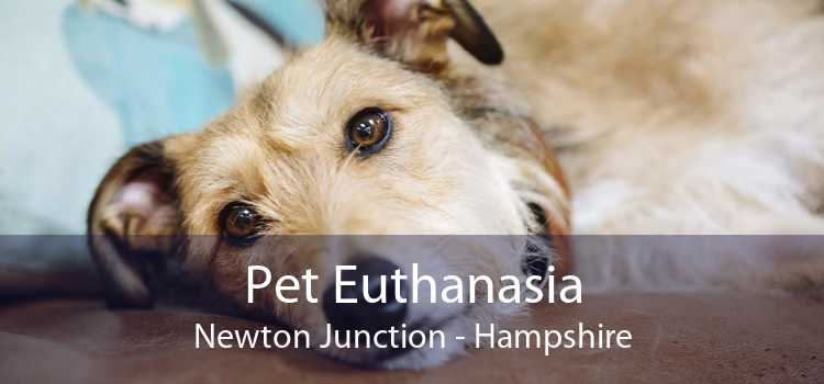 Pet Euthanasia Newton Junction - Hampshire