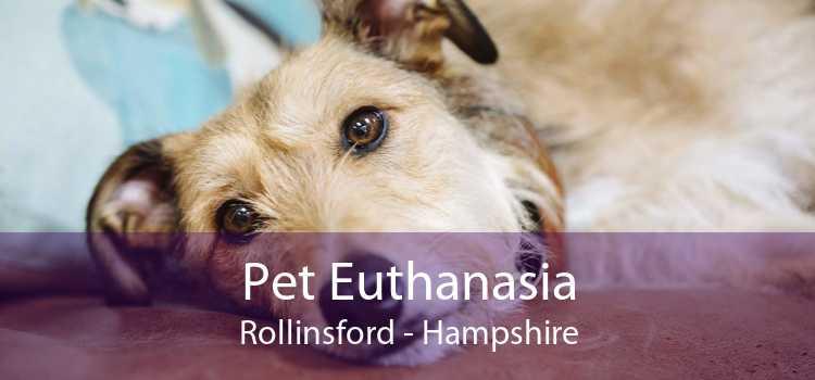 Pet Euthanasia Rollinsford - Hampshire
