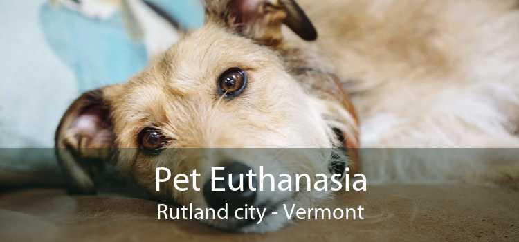 Pet Euthanasia Rutland city - Vermont