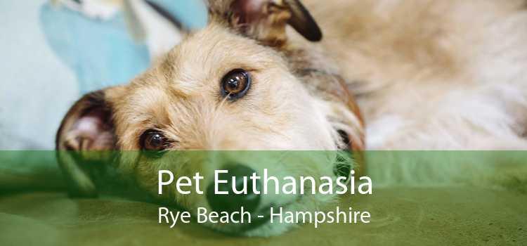 Pet Euthanasia Rye Beach - Hampshire