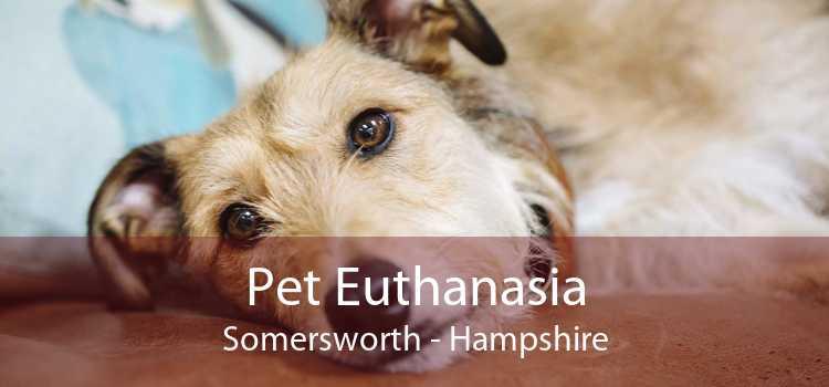 Pet Euthanasia Somersworth - Hampshire