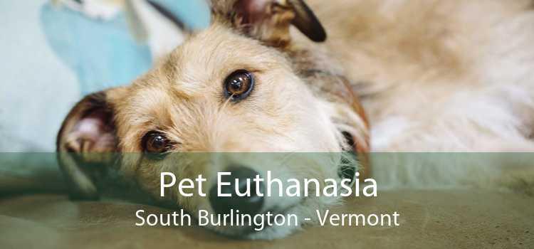 Pet Euthanasia South Burlington - Vermont