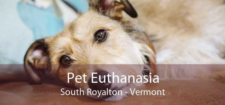 Pet Euthanasia South Royalton - Vermont