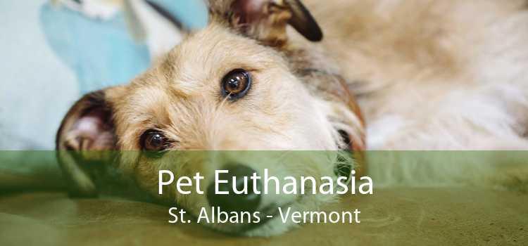 Pet Euthanasia St. Albans - Vermont
