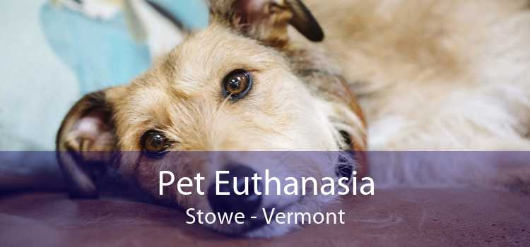 Pet Euthanasia Stowe - Vermont