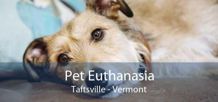 Pet Euthanasia Taftsville - Vermont