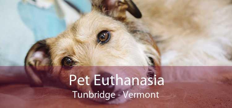 Pet Euthanasia Tunbridge - Vermont