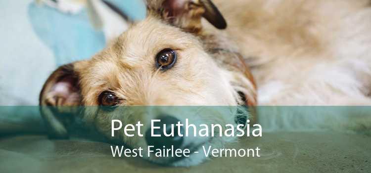 Pet Euthanasia West Fairlee - Vermont