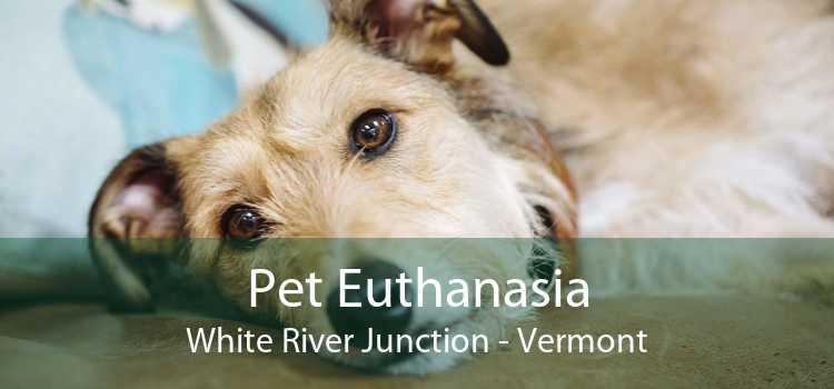 Pet Euthanasia White River Junction - Vermont