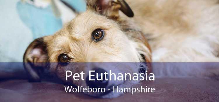 Pet Euthanasia Wolfeboro - Hampshire