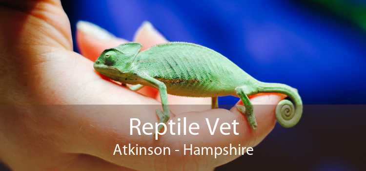 Reptile Vet Atkinson - Hampshire