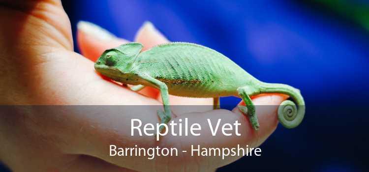 Reptile Vet Barrington - Hampshire