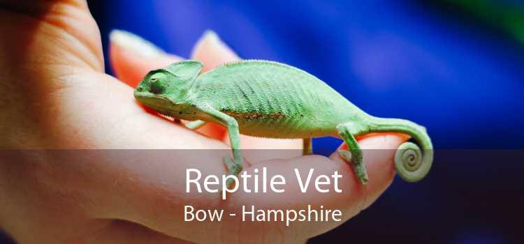 Reptile Vet Bow - Hampshire