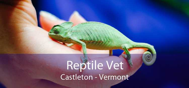 Reptile Vet Castleton - Vermont