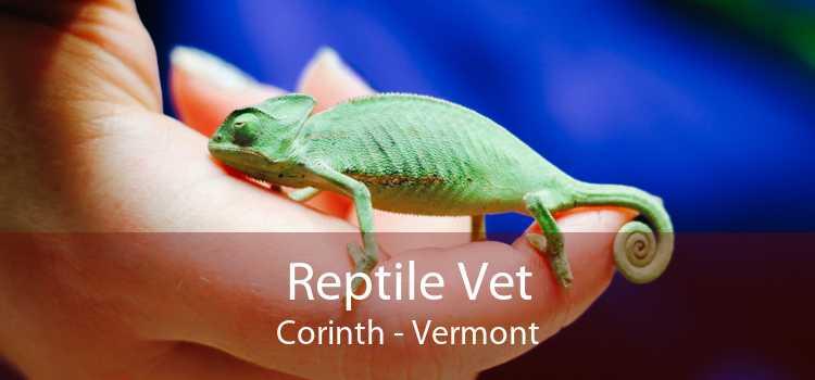 Reptile Vet Corinth - Vermont
