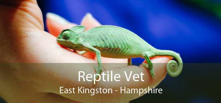Reptile Vet East Kingston - Hampshire