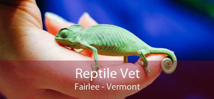 Reptile Vet Fairlee - Vermont