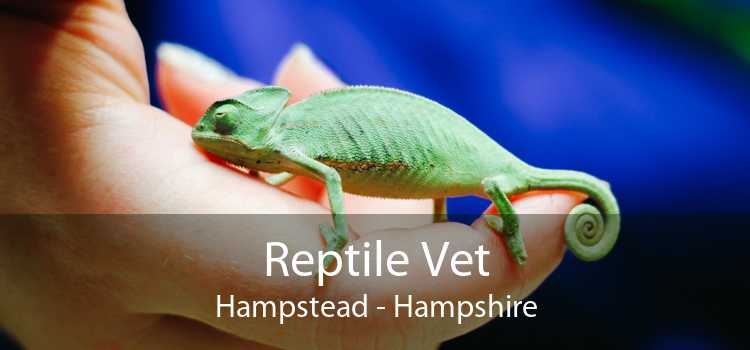 Reptile Vet Hampstead - Hampshire