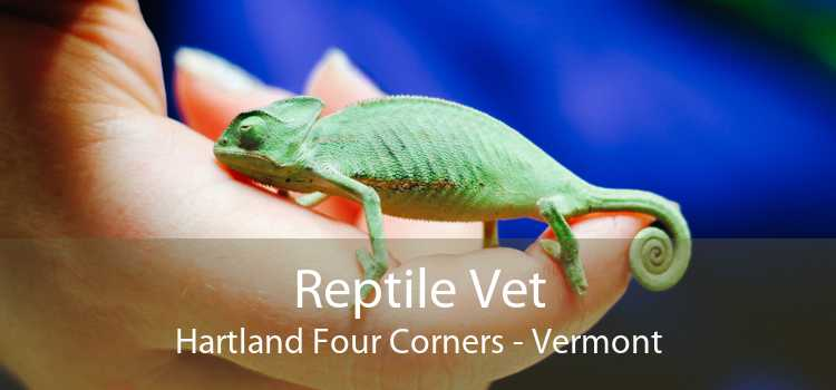 Reptile Vet Hartland Four Corners - Vermont