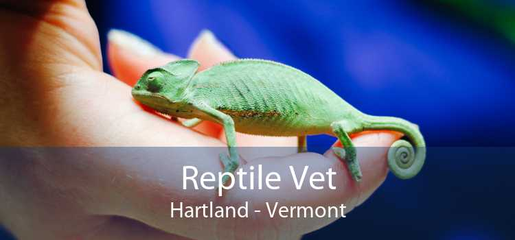 Reptile Vet Hartland - Vermont