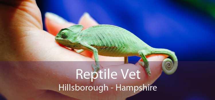 Reptile Vet Hillsborough - Hampshire
