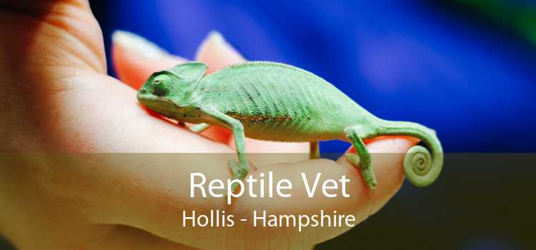 Reptile Vet Hollis - Hampshire