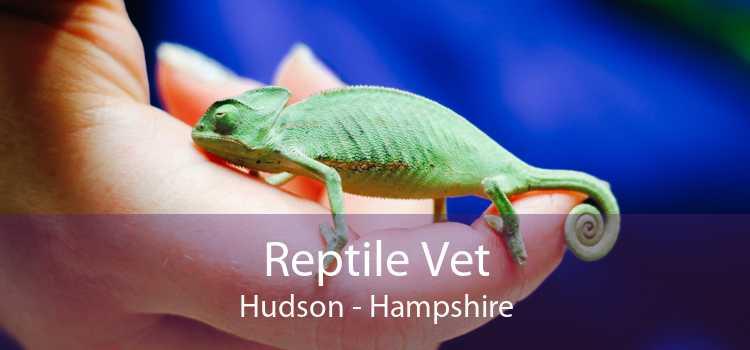 Reptile Vet Hudson - Hampshire