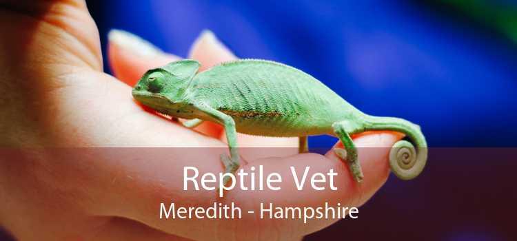 Reptile Vet Meredith - Hampshire