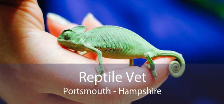 Reptile Vet Portsmouth - Hampshire