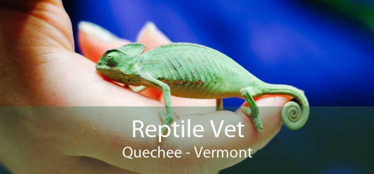 Reptile Vet Quechee - Vermont