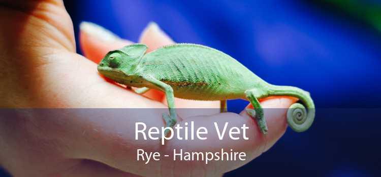 Reptile Vet Rye - Hampshire