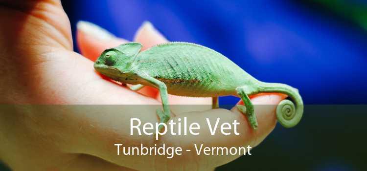 Reptile Vet Tunbridge - Vermont