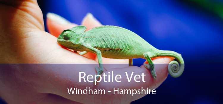 Reptile Vet Windham - Hampshire
