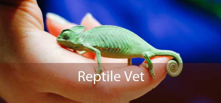 Reptile Vet