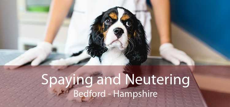 Spaying and Neutering Bedford - Hampshire