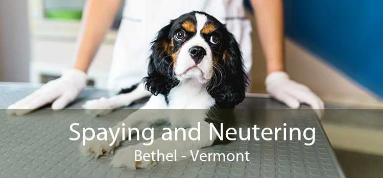 Spaying and Neutering Bethel - Vermont