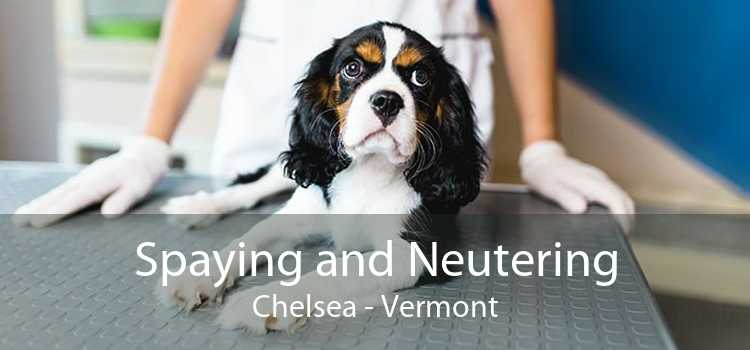 Spaying and Neutering Chelsea - Vermont