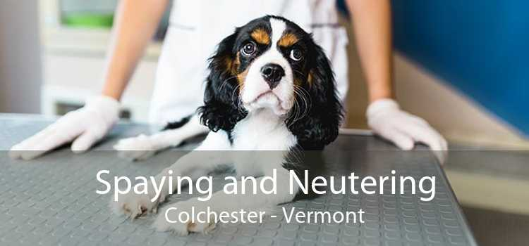 Spaying and Neutering Colchester - Vermont