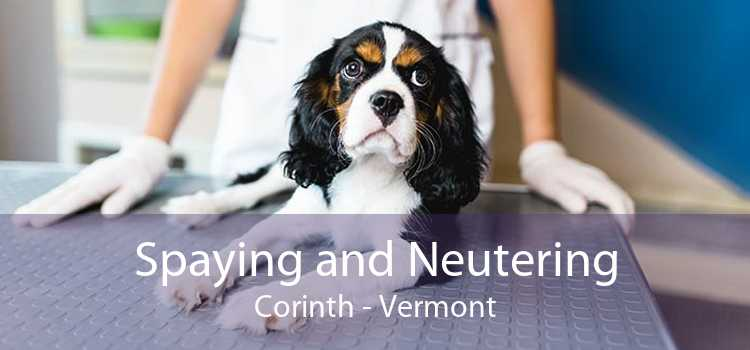 Spaying and Neutering Corinth - Vermont