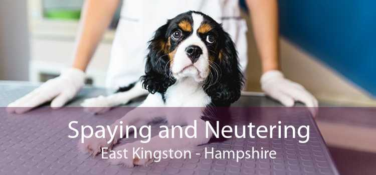 Spaying and Neutering East Kingston - Hampshire