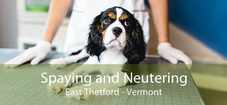 Spaying and Neutering East Thetford - Vermont
