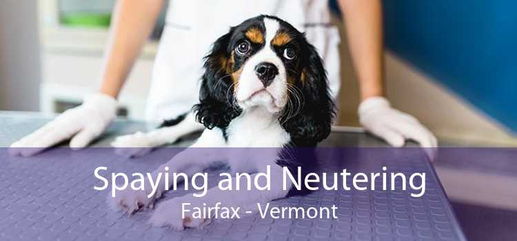 Spaying and Neutering Fairfax - Vermont