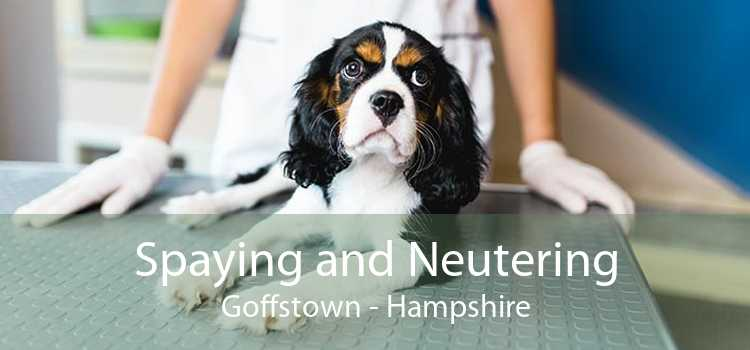 Spaying and Neutering Goffstown - Hampshire