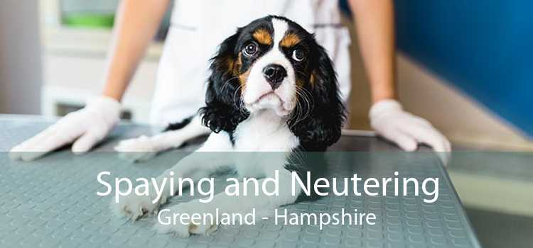 Spaying and Neutering Greenland - Hampshire