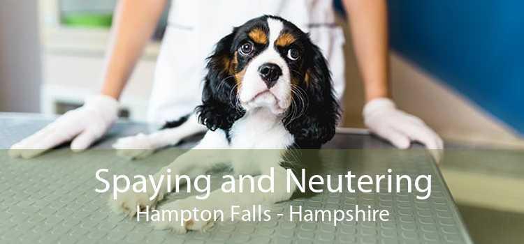 Spaying and Neutering Hampton Falls - Hampshire